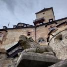 orava_castle_asus_zenfone_6_1