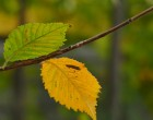Autumnale, cu Panasonic FZ1000