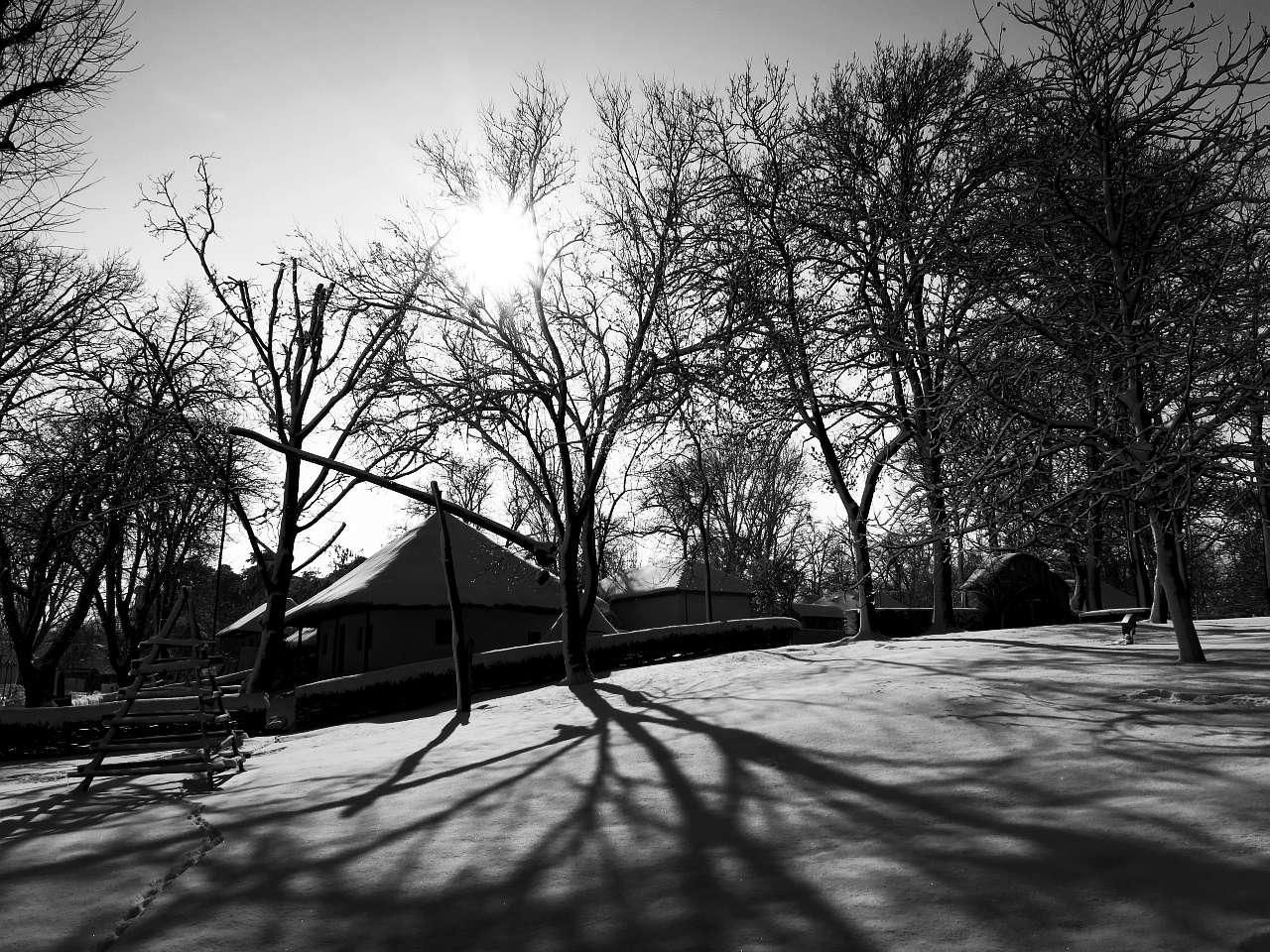 canon_iarna