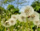Prin Grădina Botanică, cu Samsung Galaxy S7 Edge