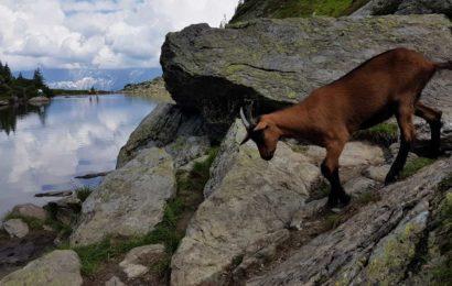 Vederi de prin Alpi, făcute cu un telefon